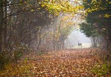 鹿路径 库存图片