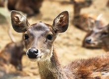 鹿顶头年轻人 免版税库存照片