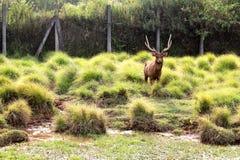 鹿骑士 库存照片