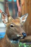 鹿头反对迷离背景的 库存图片
