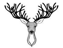 鹿头 美丽的垫铁 讲的神色 也corel凹道例证向量 库存照片