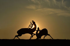 鹿`雕塑`战斗  图库摄影