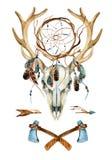 鹿头骨 有dreamcatcher的动物头骨 免版税库存图片