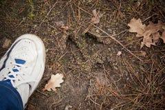 麋跟踪,在地面的脚印步 库存照片