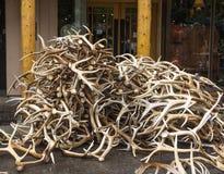 麋鹿角拍卖 库存图片