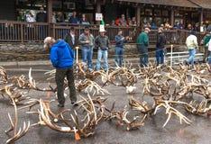 麋鹿角拍卖 免版税库存图片