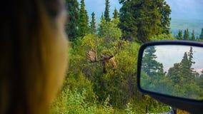 麋POV从汽车的妇女 库存图片