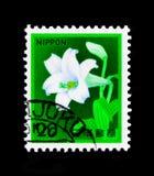 麝香百合百合属植物longiflorum,动物区系、植物群和文化遗产serie,大约1982年 库存图片