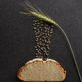 黑麦五谷掉下来耳朵 库存图片