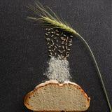 黑麦五谷掉下来耳朵 图库摄影