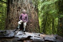 麦克米伦省公园大教堂树丛温哥华岛 库存图片