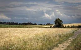 麦地、一棵大树和黑暗的云彩 图库摄影