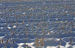 麦地冬天 库存照片