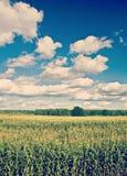 麦地和多云天空instagram窗框 库存图片