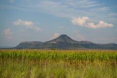 麦地和山在Clarens附近,自由州,南非 库存照片