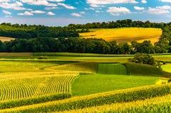 麦地和绵延山在农村约克县,宾夕法尼亚 库存照片