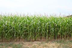 麦地的边缘 库存照片