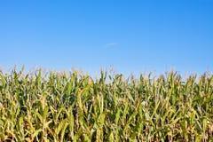麦地边缘  库存图片