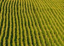 麦地从上面 库存图片