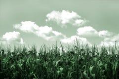 麦地 库存照片