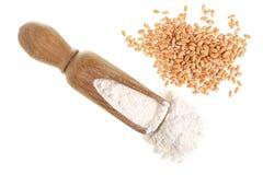 麦子五谷和堆在白色背景隔绝的木瓢的面粉 顶视图 平的位置 库存照片