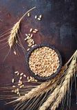 麦子五谷和小尖峰在生锈的背景 库存图片