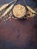 麦子五谷和小尖峰在生锈的背景 免版税库存图片