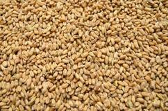 麦子五谷 免版税库存照片