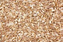 麦子关闭 免版税库存图片