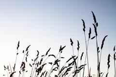 麦子农场的剪影 免版税库存图片