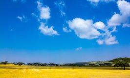 麦子农场 免版税图库摄影
