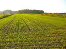麦子冬天 库存照片