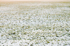 麦子冬天 免版税库存图片