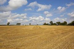 麦子发茬在秋天 免版税库存照片