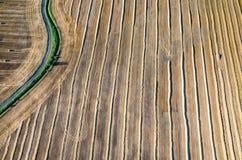 麦子发茬 图库摄影