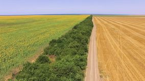 麦子和向日葵领域,空中录影 影视素材