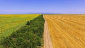 麦子和向日葵领域,空中录影 股票录像
