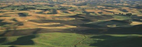 麦子和大麦 免版税库存照片