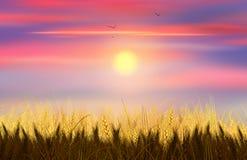 麦子和天空 向量例证