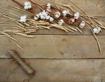 麦子和棉花在木背景 免版税图库摄影