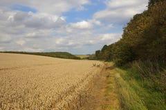 麦子和森林地 免版税库存图片