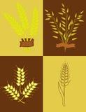 麦子和燕麦的耳朵 免版税图库摄影