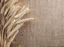 麦子和玉米边界粗麻布背景的耳朵 库存图片