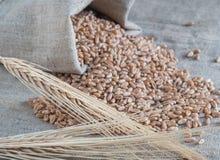 麦子和玉米钉在桌上 免版税库存图片