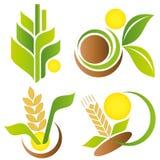 麦子和玉米 叶子徽标集合模板向量 库存照片