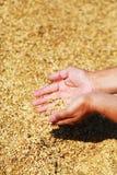麦子和现有量 免版税库存照片