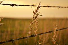 麦子和铁丝网 图库摄影