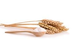 麦子和面粉的耳朵在匙子 免版税库存照片