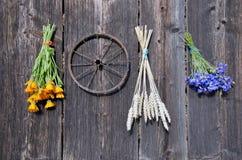 麦子和医疗草本束在老木墙壁上 库存照片