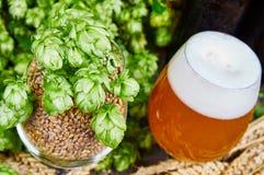 麦子啤酒 免版税库存照片